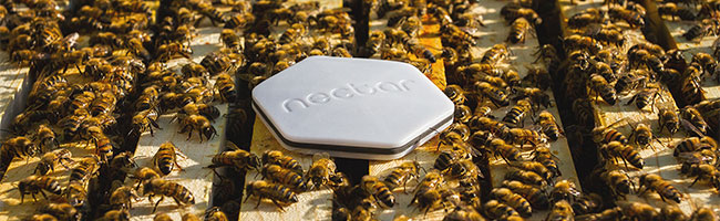 A better future for beekeepers thanks to industrial design and technology